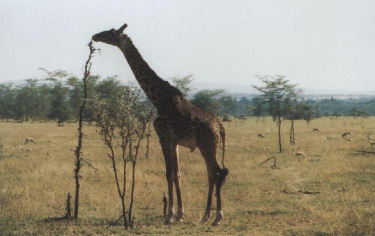 Prova microfono... ! (Lake Manyara, Tanzania, 1996)