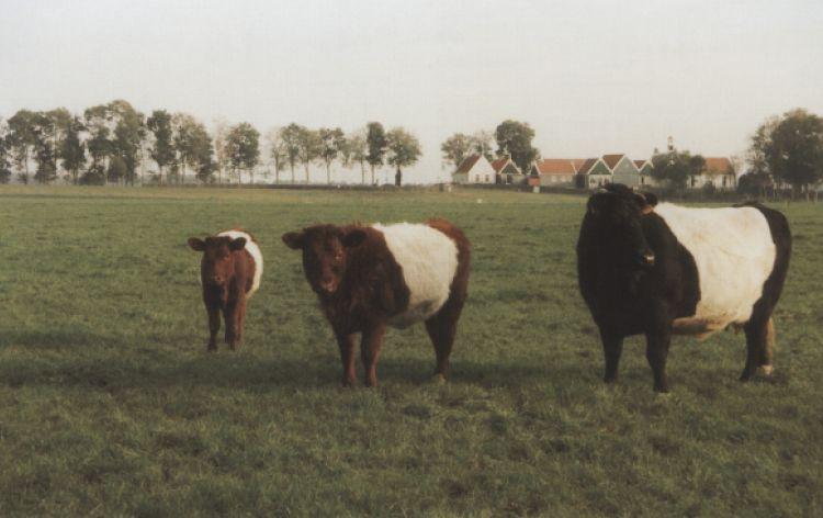 Mettiamoci sopra una pezza! (Schokland, Olanda, 1999)