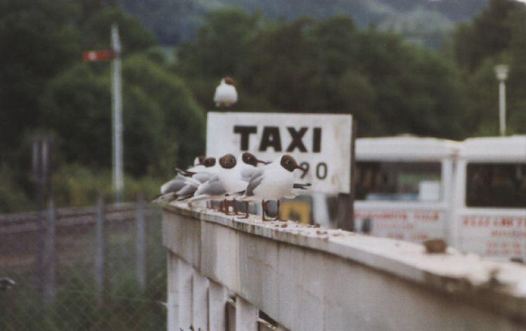 Taxiii ...! (Pitlochry, Scozia, 1998)
