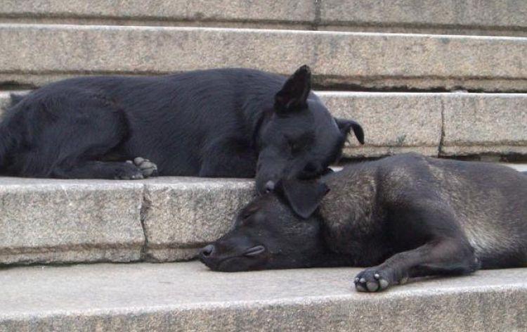 ...sogniamo (Odessa, Ucraina, 2007)