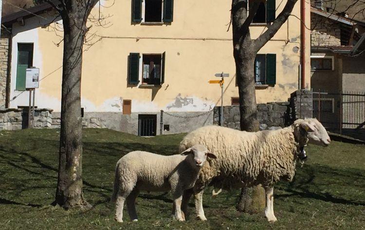 l'ultima foto insieme - Erbonne (Italia), 2016